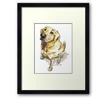 Golden Lab Framed Print