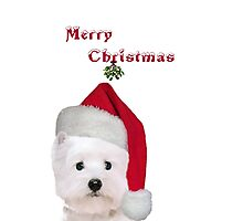 Merry Christmas puppy Photographic Print