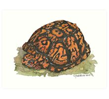 Eastern Box Turtle Art Print