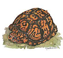 Eastern Box Turtle Photographic Print