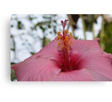 Exotic Flower. Canvas Print