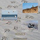 VOGELS aan zee en in de duinen by steppeland