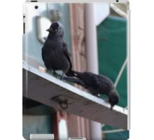 2 Inner City Jackdaws Above a Grocer Shop in Newport South Wales. iPad Case/Skin