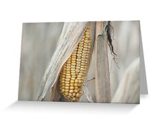 Awaiting Harvest  Greeting Card
