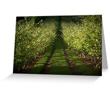 Apple Orchard, Lenswood. Greeting Card