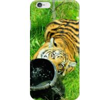 Young Tiger at Play iPhone Case/Skin