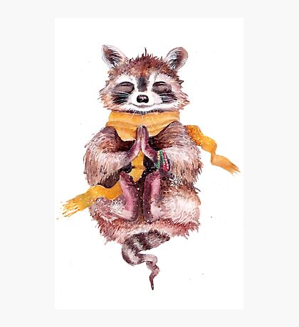 Raccoon meditates Photographic Print