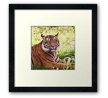 Watching Tiger Framed Print