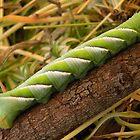 Privet Hawk Moth Caterpillar by Trish Meyer