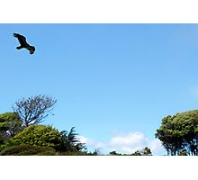 Berkeley   Marina Hawk Photographic Print
