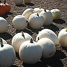 White Pumpkins For Sale by Jane Neill-Hancock