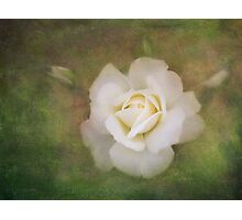 The delicate harmony of a rose Photographic Print