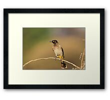 Red-eyed Bulbul - African Wild Bird - Perch of Color Framed Print