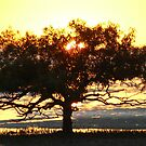 Sunrise Clairview, MangroveTree  by Virginia  McGowan