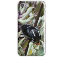 New Holland Honeyeater eating Kangaroo Paw iPhone Case/Skin