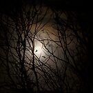 Beware The Halloween Moon by Ann  Van Breemen