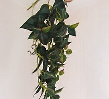 SOLD - IVY  by Colleen2012