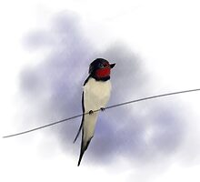 Swallow by Ajhasse