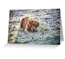 Frosted dog Greeting Card