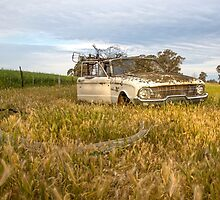 The Classic Old Ford Falcon Ute..... Seen better days.... by mitpjenkeating