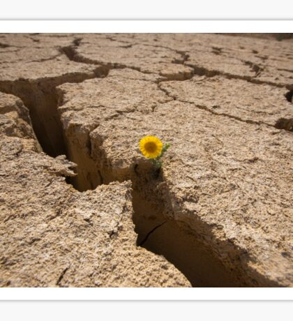 Flowers grows out of dry cracked mud  Sticker