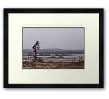 Canadian North - Lone Pine, Fields, Hills and Fresh Snow Framed Print