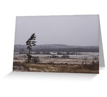 Canadian North - Lone Pine, Fields, Hills and Fresh Snow Greeting Card