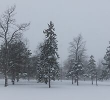 A Cold December Morning - Snowstorm in the Park by Georgia Mizuleva