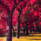 Autumnal Park 786614 by Ian McGregor