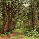 Old Country Road by ienemien