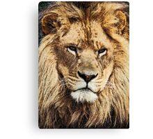 Rescued Lion Canvas Print