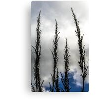 Native grass flowers Canvas Print