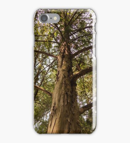 tree in the forest iPhone Case/Skin