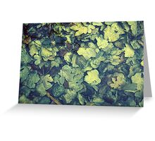 Autumn leaves in water Greeting Card