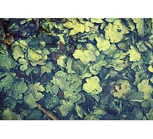Autumn leaves in water Photographic Print