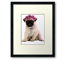Hipster Pug Puppy Framed Print