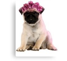 Hipster Pug Puppy Canvas Print