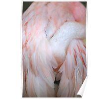 Flamingo #4 Poster