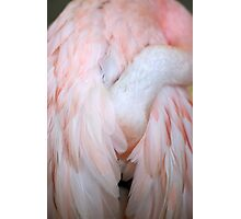 Flamingo #4 Photographic Print