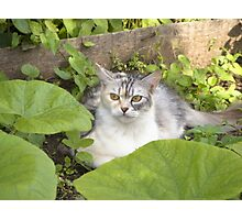 Cat in the garden Photographic Print