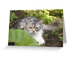 Cat in the garden 2 Greeting Card
