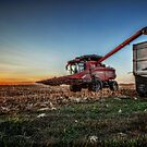 Harvest Time by Steve Baird