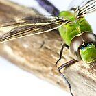 Dragonfly by Cara Johnson