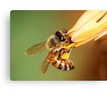 Agile bee Canvas Print