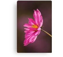 Cosmos is my name Canvas Print