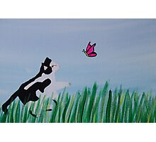 Cat Chasing A Butterfly Photographic Print