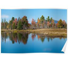 Foliage Reflections Poster