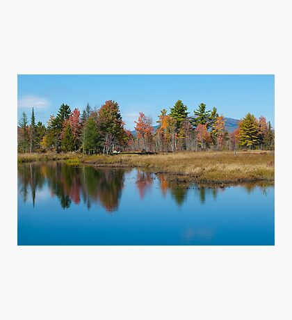 Foliage Reflections Photographic Print