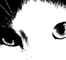 Cat Eyes (Black and White) by ValeriesGallery