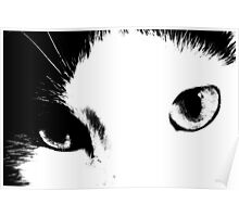 Cat Eyes (Black and White) Poster